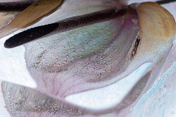 Anthurium in kristalhelder ijs 3 van Marc Heiligenstein