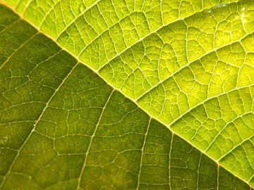 bladnerven groen von Joke te Grotenhuis