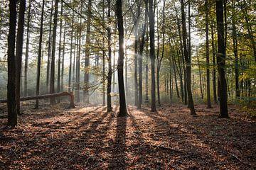 L'automne dans le Veluwe sur Jisca Lucia
