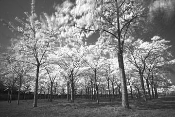 Forest sensation van Saskia Vader
