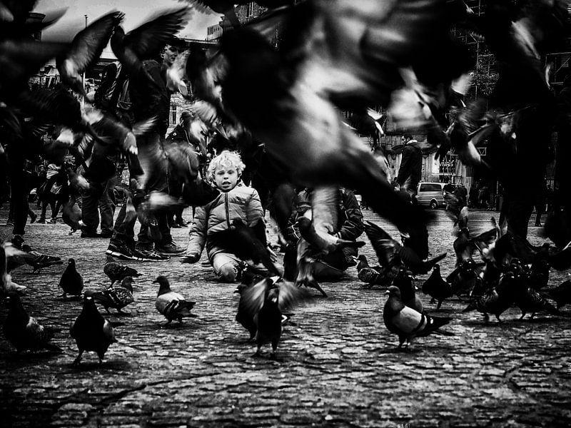 Who's afraid of birds? van Lex Schulte