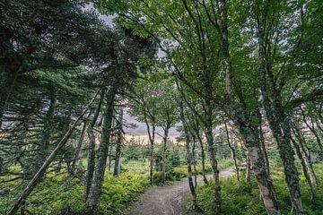 In den Wald von Robert de Boer