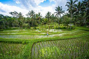 Boer aan het werk op groen rijstveld in Bali Indonesië van Jeroen Cox
