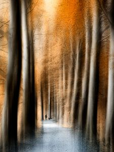 Pad door het oranje bos