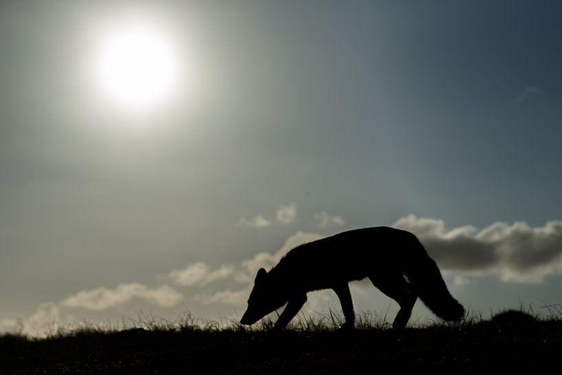 Silhouette van een vos van Menno Schaefer