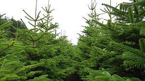 Weihnachtsbaumplantage von BVpix