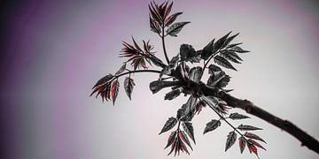 Bloemen bladeren van Jane Changart