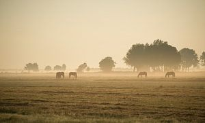 Paarden in de ochtendmist. van