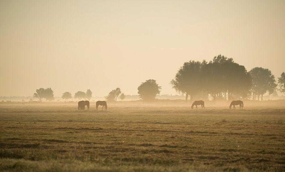 Paarden in de ochtendmist.