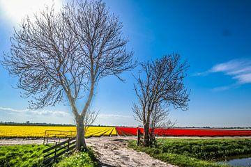 2 bomen van peterheinspictures