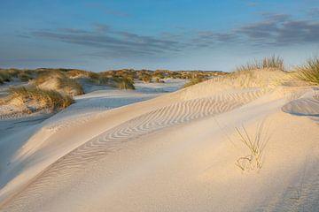 Junge Dünen im Sonnenlicht - Natürliches Ameland von Anja Brouwer Fotografie