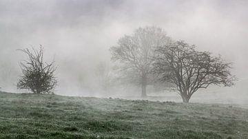 Bomen in mist van Gottfried Carls