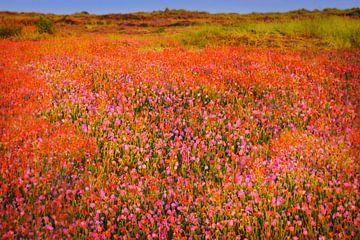 Fleurs sauvages le long de la piste cyclable.
