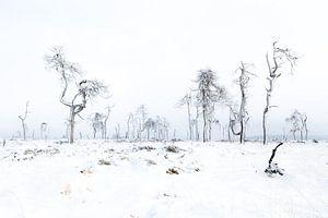 Schneelandschaft von Alain Deflou