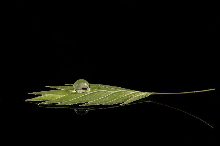 Druppel met reflectie van Tanja van Beuningen