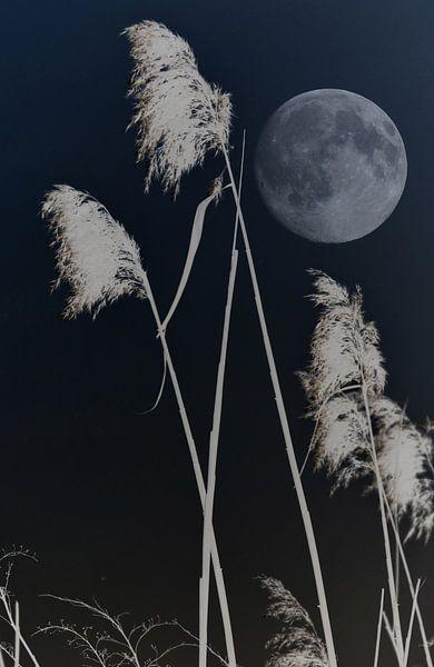 Nuit dans les roseaux ohmyprints for Miroir 90x140