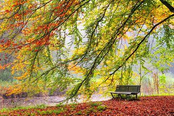 Bankje in het Amsterdamse bos in de herfst van Dennis van de Water