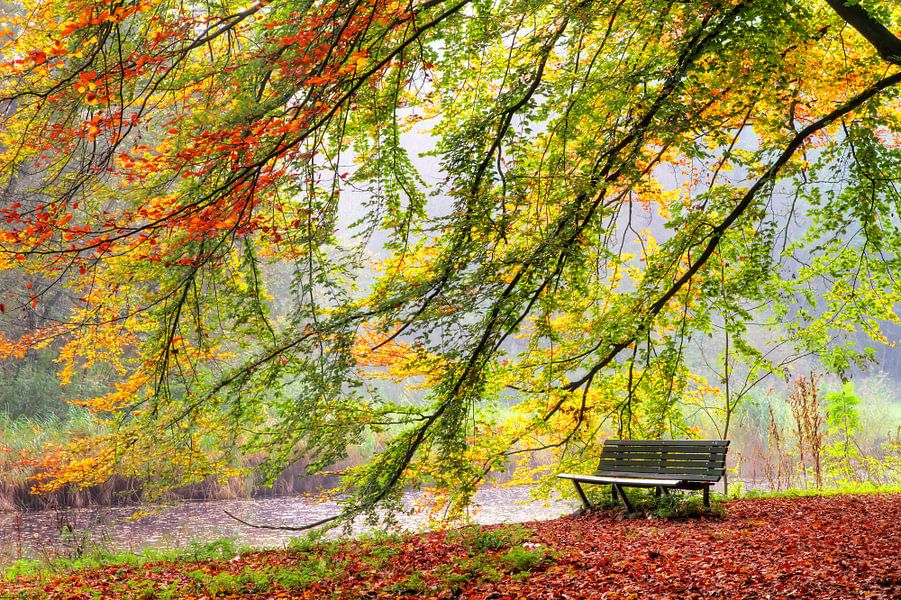 Bankje in het amsterdamse bos in de herfst van dennis van de water op canvas behang en meer - Idee schilderij living ...