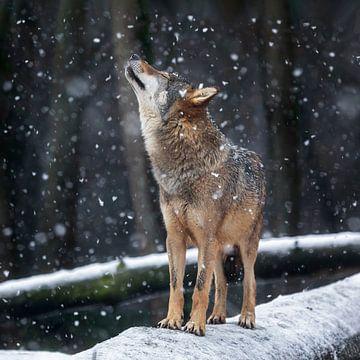 im Schnee genießen von gea strucks