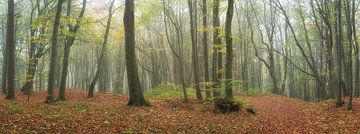 Fantastique forêt de feuillus dans le panorama