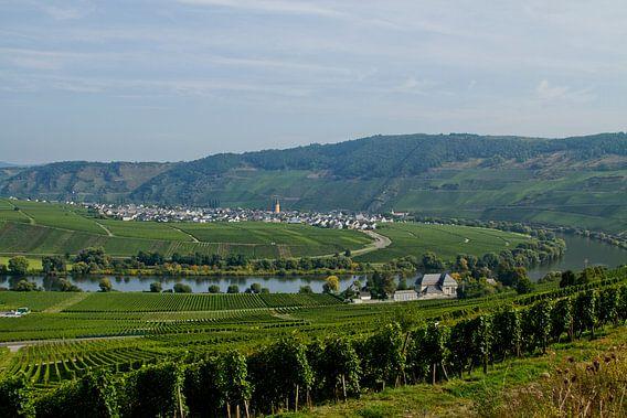 Groene schoonheid. Wijngaarden in de Moesel Duitsland landschap in de bergen