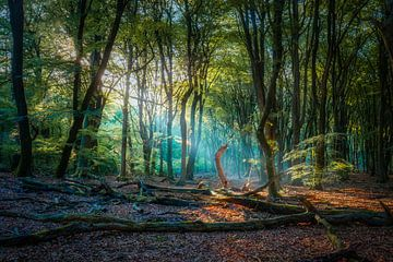 Prachtige kleurencombinatie in een mystiek bos van gooifotograaf
