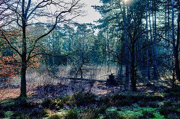 Licht im Wald von george vogelaar