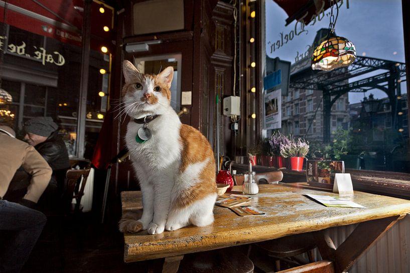 Huiskat Café De Doelen, Amsterdam van Robert van Willigenburg