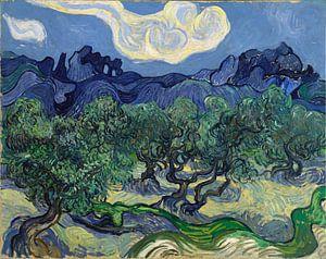 Vincent van Gogh. De olijfbomen van