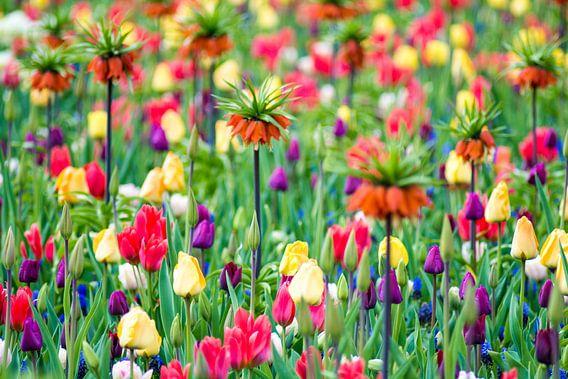 Lente bloemen van Jelmer Jeuring