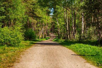 Sallandse heuvelrug wandelweg met zon.