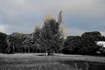 Bloemendaal, boom van Esther Cobelens