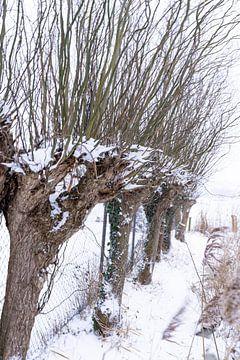 Knotwilgen in een winterslandschap! van Lieke van Grinsven van Aarle