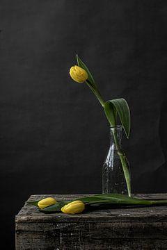 Foto print   Stilleven van  drie gele tulpen   Botanisch   Modern