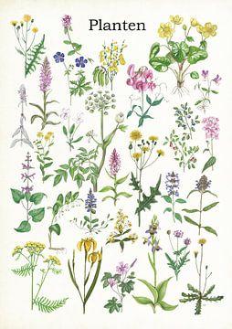 Pflanzen von Jasper de Ruiter