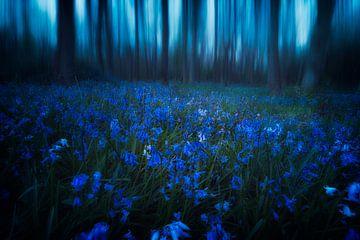 Midnight Psychedelics von Daniel Laan