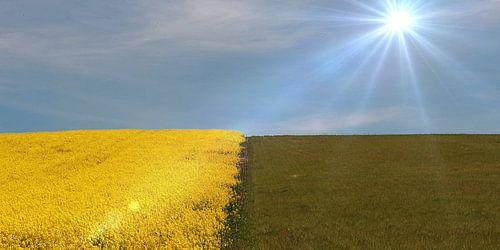Geel en Groen van