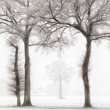 Winterzauber von Lars van de Goor