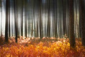 Mysterieus bos in de herfst van