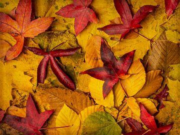 Herfstbladeren van Erik de Klerck