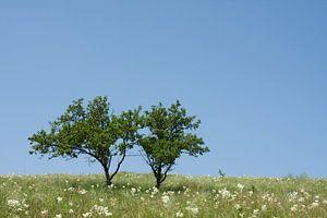 2 Bomen.