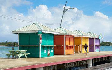 Tropische kleuren van