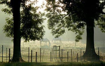 Paarden in de ochtendnevel von Pieter Veninga