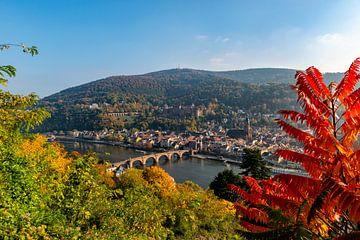 Heidelberg in Baden-Württemberg, am Neckar von Sjoerd van der Wal