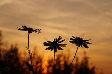 Blumen bei Sonnenuntergang von Willemijn