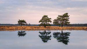 Bomen in het  Nationaal Park Dwingelderveld van Marga Vroom