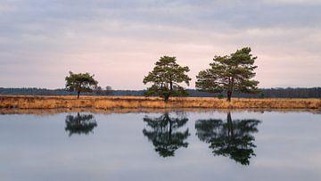 Bäume im Nationalpark Dwingelderveld