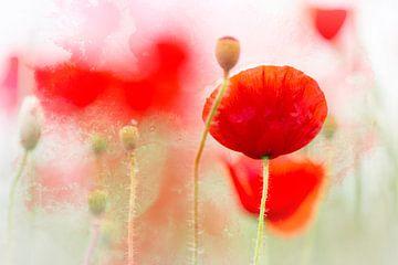 Blühenden Mohnblumen  von Bob Daalder