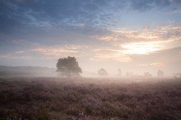 Landschaft lila Moor von Susan van Etten