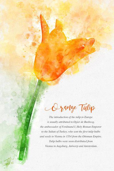 Orange Tulpe von Theodor Decker